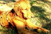 My Dog Argo