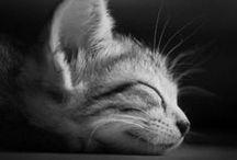 Søte dyr / Cute animals <3