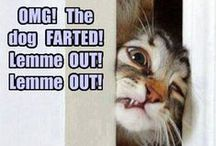 Funny / Pictures of funny animals