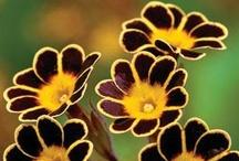 Flowers / by Mary Duenkel
