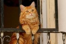 Cats / Dogs come when they're called; cats take a message and get back to you later. - Mary Bly -