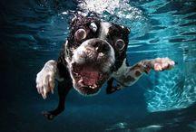 Seth Casteel & Carli Davidson / Dogs under water by Seth Casteel & Shake by Carli Davidson