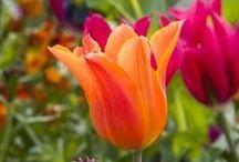 FLOWERS...!