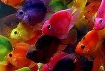 FISH, TANKS, EQUIP, ETC....