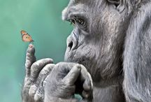 Gorilla / by Yuko Kinouchi
