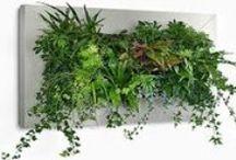 DECORATE WITH PLANTS / Todo lo que puedes hacer en tu jardín, para que despierte admiración con poco dinero
