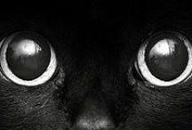 Katzen =^.^=