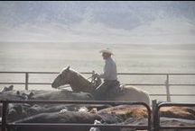 Cowboy and Cowgirl Up! / Cowboys, cowgirls, ranches, and the occasional cattle dog.