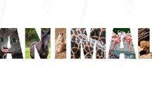 ☣ animal ☣