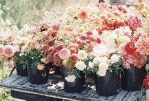 Pretty in Flora