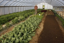 Rose Creek Farms' High Tunnel Production