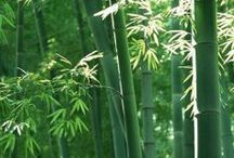 Bamboo / by Jane Hansen