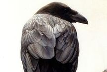 The Crow Family / All the magical blackbirds in the crow family...my favorite are rooks!