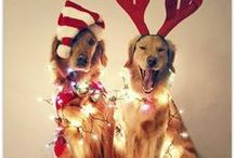 Happy PAW-lidays / It's the PAW-liday season, and Santa Paws is coming to town!