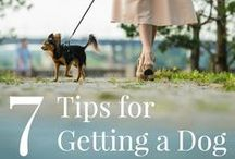 Doggie Tips / Sit. Stay. Go outside. There are so many commands to teach a dog in the very beginning, it can be overwhelming. Lucky for you, we've compiled all of our favorite puppy tips into one single board!