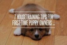 First-Time Pet Owners / You just adopted a pet for the first time and you have no clue what to do... Look no further than right here. We've got you covered with tips & tricks on how to survive being a first-time pet owner.