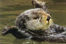 Otters / by Terra Yoshida