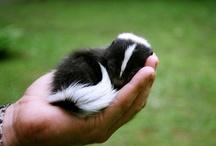 skunks / by Terra Yoshida