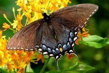 Moths and Butterflies / by Terra Yoshida