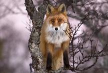 Foxes / by Terra Yoshida