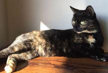 Cats Cats & More Cats  / I love my felines!