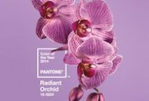 Radiant Orchid / Pantone's Color of the Year 2014