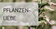 Pflanzen-Liebe / 20 Pflanzenarten werden auf unseren Bio-Feldern in La Gacilly angebaut. Kornblume, Kamille, Rose ...