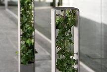Efeu Kultur Vermehrung Und Verwendung Von Im Gartenbau Kletterpflanze