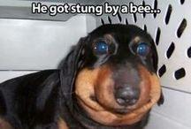 So Funnyyyyyy!!!