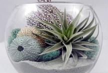 Sea~shell ispiration