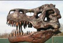 Bronze Animal Skulls / Bronze busts of prehistoric and currently living animal skulls.