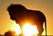 Animals / Cute animals, stunning animal photography.