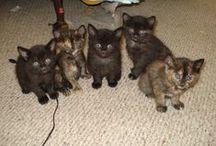 Royal Canin Cat Pinterest Contest