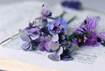 Colours//Lilac