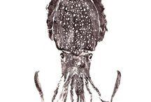 I like cuttlefish and squids / Yep