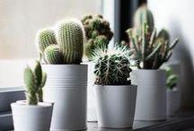 Green & Cactus