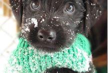 Pups a dogs / Cute!,