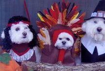 Pet Thanksgiving!