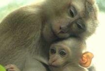 Mundo  Animal - ANIMALS... with Love / tudo são grandes ideias