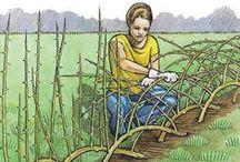 Nature, gardening