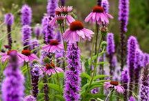 ✭ A Witches Garden ✭ / Garden Herbal Magick ~ http://www.thewitchymommy.com