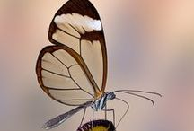 butterflies (delicate& wonderful) / by Sayed Saber