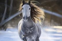 horses beautifull