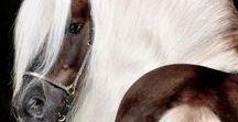 Dogs and Horses / Hunder og hester mm.