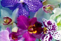Flores - ORQUIDEAS