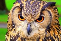 Mundo Animal - Aves -MOCHOS E CORUJAS