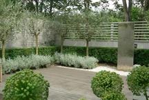 green garden / ogród zielony / by Wytwórnia Tlenu /gardens/ogrody
