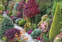 Plants an Gardening