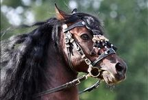 Animal / horse