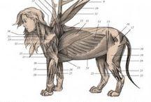 Anatomy Creature
